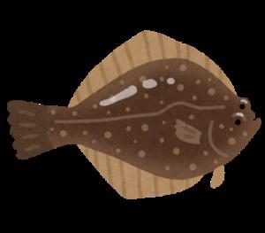 魚のカレイ